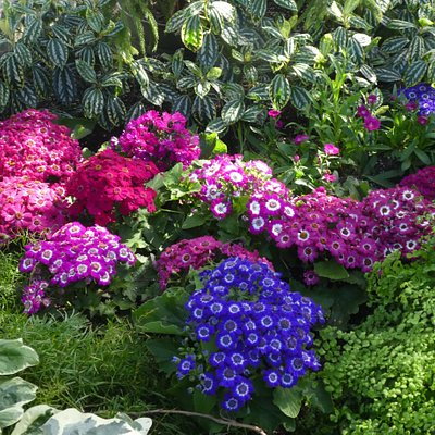 Grouped flowers