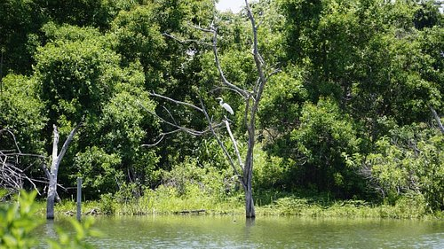 More Pictures of Waco Lake, note the bird in the tree.