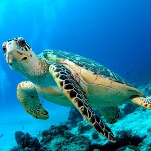 Turtle - Chileno Bay