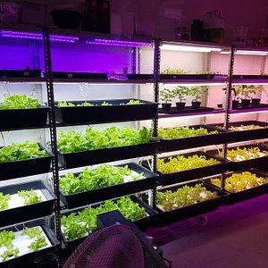 Salladsgrottan  Vi odlar sallad och andra grönsaker i ett bergrum