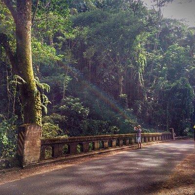 Jungle back roads