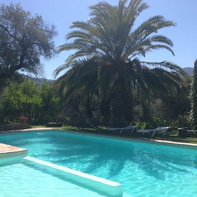This is the big swimming pool surrounded by palm trees and flowers