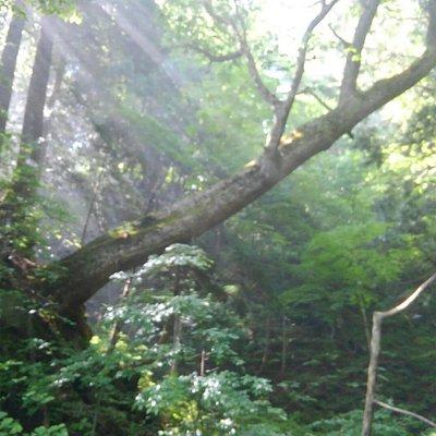 イトムカの入り江に差し込む木漏れ陽