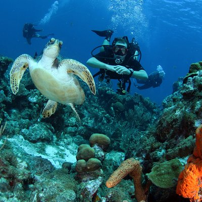 Watching a beautiful green sea turtle while Diving Curacao's Mushroom Forest.