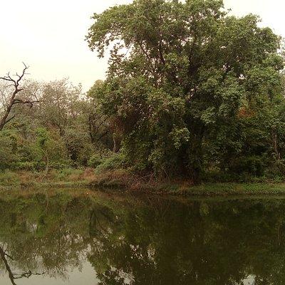 City forest, Nagar van, Chandigarh