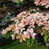 Flowerpsyche