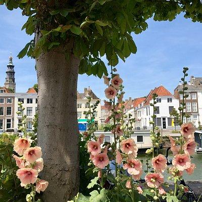 Middelburg (stok)rozen stad