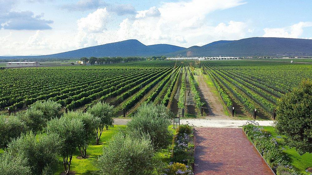 Vista a los viñedos desde el restaurante