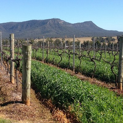 vines during a crisp winters day