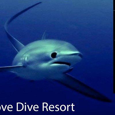 Thresher Cove PADI 5 Star IDC Dive Resort