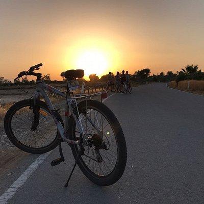 Sunny Cycles