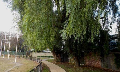 Old Peppercorn tree
