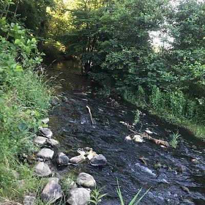 Smuk natur med flere stier hvor man kan gå, løbe og cykle. 1 km rundt om søen.