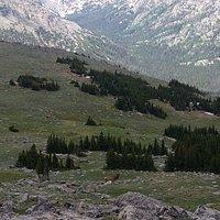 Beautiful Tundra - Bull Elk Checks Out the Intruders