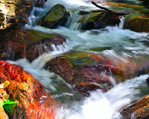 Colourful lichen under crystal clear rapids