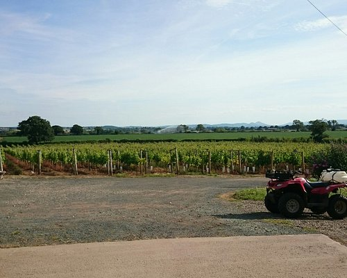 Family vineyard in the heart of Shropshire