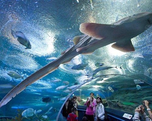๊Underwater World Pattaya