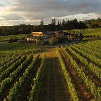 Trisaetum Winery, Ribbon Ridge AVA, Summer