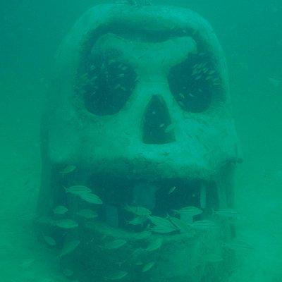 SWARA Skull