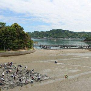 無人島で釣堀(魚は無料!)潮干狩り(3月~6月)BBQ、磯釣り、他、子供や女性も安心して遊べます。