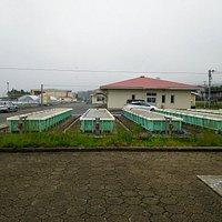 たくさんのウニ栽培槽(ウニ栽培漁業センター)