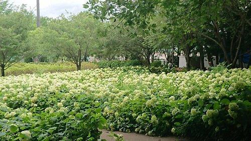 小陰があり暑いこの時期でも散歩するのに良い公園です。公園に来る前にスーパー(アルプス)やパン屋(パンパティ:カレーパンがオススメ)もあるのでお弁当を買って過ごすのに良い場所です。