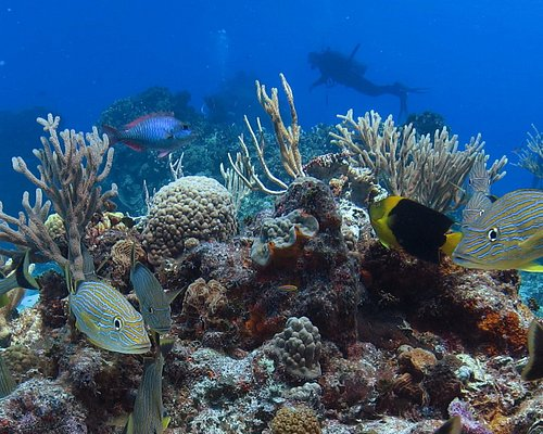 Divers on the patch reef.