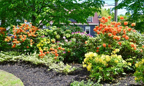 Bright flower beds
