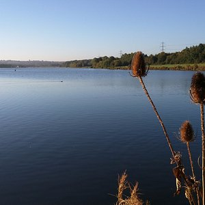 The main lake looking south at Rother Valley