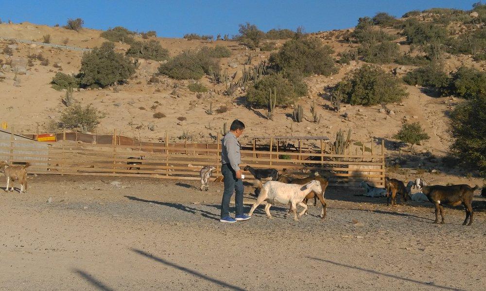 Quesos de Cabra  natural Ademas pude apreciar el proceso
