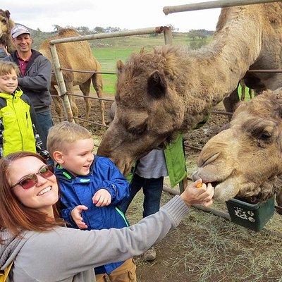 Oasis Camel Dairy gets up up close!