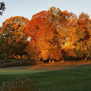 Old Field Habitat with Hardwood Cover on course (photo credit Ed Hass)