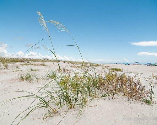 Anastasia State park, dunes and plants
