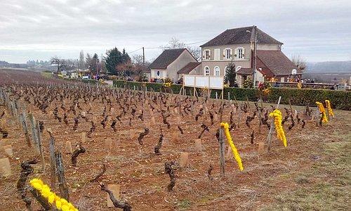 2017 : Saint Vincent Tournante à Saint Martin Sous Montaigu pour l'AOC Mercurey