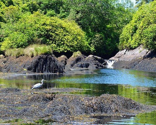 Watching a heron at The Blue Pool as we wait for our boat