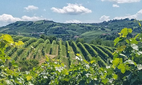 Barbaresco Vineyards
