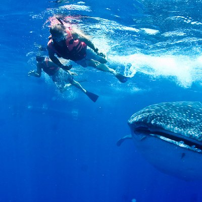 Swim with whale sharks tour Cancun couple tripadvisor