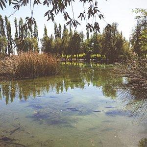 Una laguna hermosa llena de peces es la vista que nos regala la bodega mientras degustabamos vin