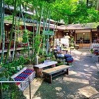 中庭の竹林
