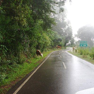 Acá se empieza a estrechar el camino... cuidado con las vacas!