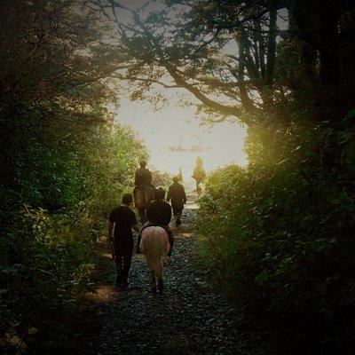 The Magical bush ride