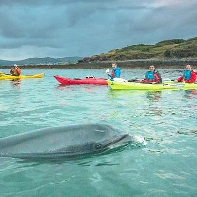 Kayaking with Fungie in Dingle, Irish Adventures