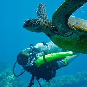 Happy Scuba Diver - Pretending to fly next to the Hawaiian Green Sea Turtle