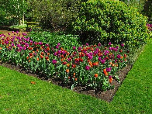 Chelsea Physic Garden - April