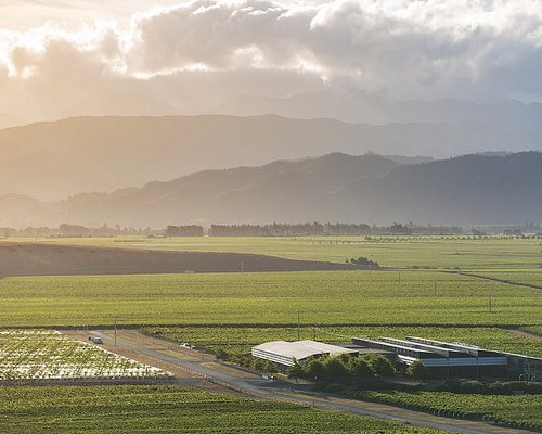 Our whole operation is under one roof in the middle of our vines