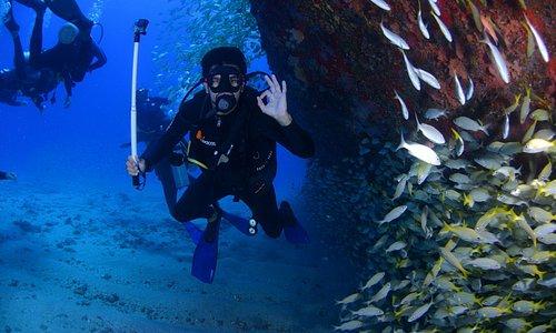 Blue Hole Diving at Belize Diving Services