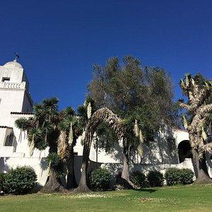 Blooming Yukka trees by the Junipero Serra museum in Presidio park San Diego CA July 23, 2018