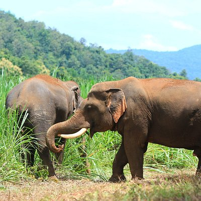 Elephant Roam Free