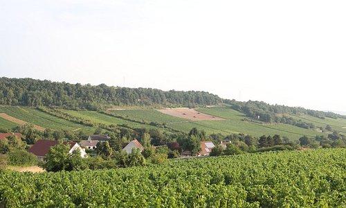 Vue de Bouzeron
