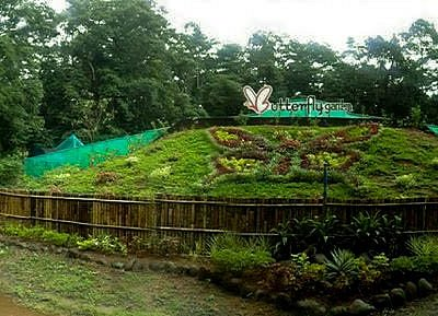 Butterfly Garden Subic is a showcase the life cycle and free flight of tropical butterflies